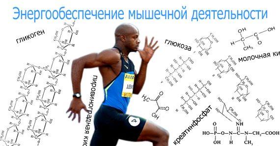 Какие вещества дают энергию мышцам