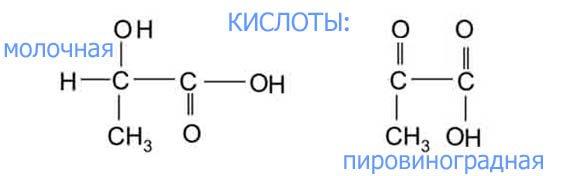 Реультат гликолиза - кислые продукты