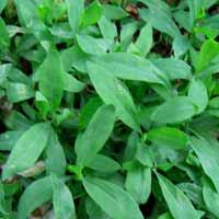 Лечение травами гастритов с повышенной и пониженной кислотностью