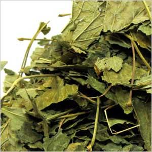 Сухой лист смородины