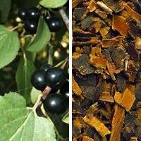 Ягоды и корень жостера (крушины)