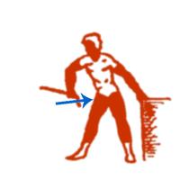 Для грудных мышц