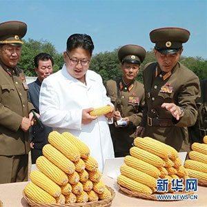 Ким осматривает кукурузу